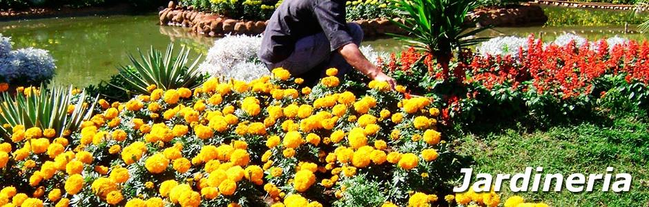 Servicios jardineria mantenimiento de jardines for Jardineria online
