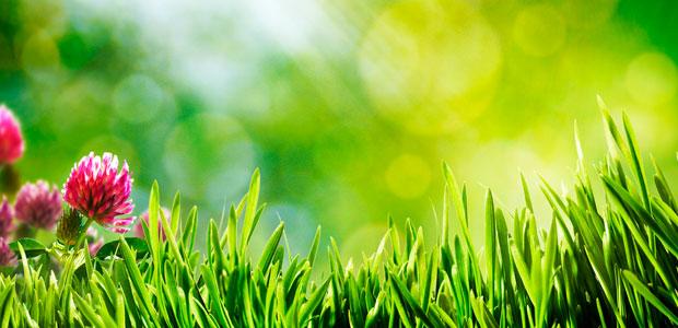 Servicios jardineria mantenimiento de jardines - Imagenes de jardineria ...